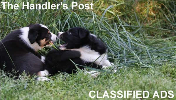 The Handlers Post